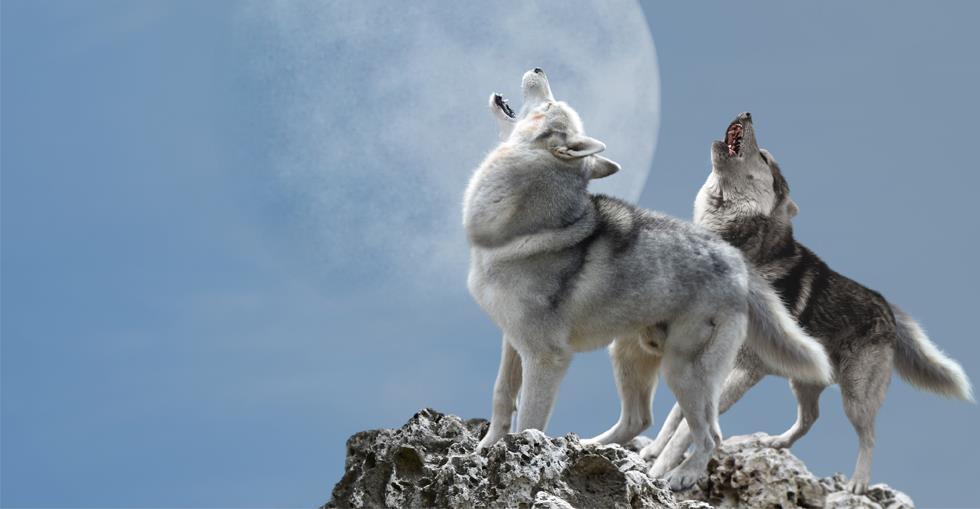 she-wolf-hero